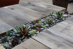 a succulent table.