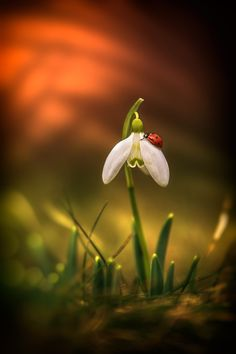 Spring messengers by Norbert G on 500px