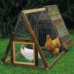 As the popularity of raising poultry in the backyard burgeons, so too does the variety and quality of designs in DIY chicken coops.