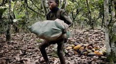 Hershey, Nestle and Mars Use Child Slaves To Make Your Chocolate   Spirit Science  It's 2015 and there are now more child slaves than there were in 2001.  51% more, in fact.  There are now 1.4 million children carrying back-breaking sacks of cacao, having their bodies whipped and beaten and crushing themselves from dawn to dusk for no pay.