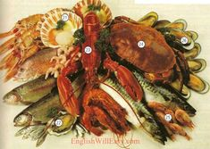 C FISH AND SEAFOOD 20 whole trout 21 scallops 22 oyster 23 lobster 24 crab 25 shrimp 26 mussels 27 fish fillet