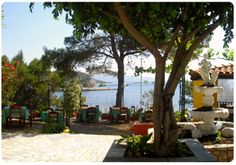 Alonissoshotels.gr   Έδεμ Εστιατόριο Αλόνησσος  Edem Restaurant Alonissos Greek, Plants, Te Quiero, Plant, Greece, Planets
