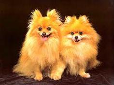 cachorros - Pesquisa Google