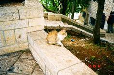 cat in Israel