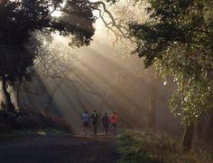 Sunlight shafts on trail