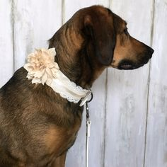 Your pooch will look wedding perfect in this lace and floral collar from HelloHazelCo. With a variety of options, click the link below to star shopping now!Shop NowHelloHazelCo