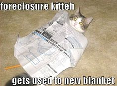 Everything You Should Know About Reverse Mortgage,Home Mortgage,Home Loan Rates,FHA Mortgage and Home Mortgage refinance. Mortgage Fees, Mortgage Humor, Refinance Mortgage, Funny Animal Pictures, Funny Animals, Funniest Pictures Ever, Self Storage, Cute Cats, Kitty