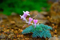 足元をよく見ると可憐に咲く高山植物と出会えます。標高が高く気温が低いため、暑い時期には涼を取りに訪れる方も多いところです。気候の変動が激しいので、雨具や羽織物を持っていくと良いでしょう。