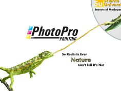 PhotoPro-Camelion - Funny take on our PhotoPro Printing process Wallpaper by Printing Services, Printing Process, Wallpapers, Digital, Funny, Prints, Wallpaper, Funny Parenting, Hilarious