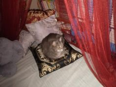 Twitter / Tassie_Jan: and my constant companion Bella ...