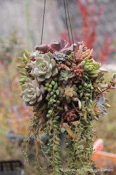 succulent                                                                                                                                                                                 More