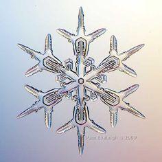 Beautiful real snowflake