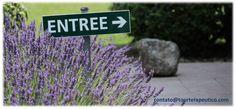 Este é o Caminho que o leva a Provence