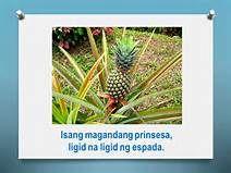 mga bugtong na may larawan at sagot - - Yahoo Image Search Results Yahoo Images, May, Image Search, Herbs, Certificate, Herb, Spice