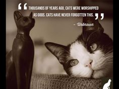 #Cat's never forget