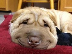 smiles.. omg