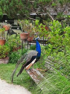 Parc Floral, Bird, Animals, Animales, Animaux, Birds, Animal, Animais