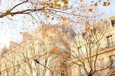"""Looks like a beautiful autumn day in Paris! (When we visited, I really loved the """"look"""" of the buildings there :)) November Colors, Welcome December, Cherry Blossom Girl, Tara Jarmon, Bare Tree, Autumn Day, Fall, France Photos, Find Image"""