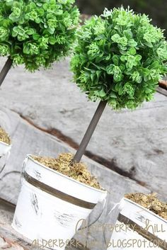 I would love these at the sides of my front door. DIY mini topiaries