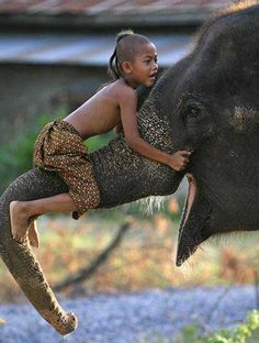 a child and his elephant. beyond jealous of this kid.