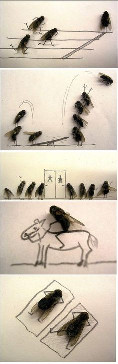 fun with fly's