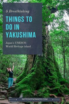 Yakushima Island is still one of Japan's best-kept secrets. From the forest to the sea, here are 5 things to do in Yakushima that are an absolute must! #yakushima #japan #kagoshima #Japan #travel #guide #TheRealJapan #Japanese #howtotravel #vacation  #trip #explore #adventure #traveltips #traveldeeper www.therealjapan.com