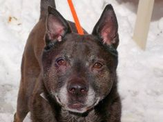 TO BE DESTROYED - 03/01/15 Manhattan Center   My name is JAY JAY. My Animal ID # is A1028340. I am a male black and gray germ shepherd mix. The shelter thinks I am about 6 YEARS old.  I came in the shelter as a STRAY on 02/19/2015 from NY 10032, owner surrender reason stated was OWN EVICT. https://www.facebook.com/photo.php?fbid=966850099994536