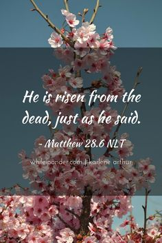He is risen from the dead, just as He said! Matthew 28.6 NLT