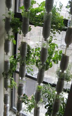 Create your own hydroponic window farm for $30, using water bottles but no soil. So innovative!