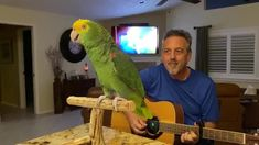 It was discovered that Tico – a double yellow-headed parrot – could carry a tune at the beginning of lockdown.