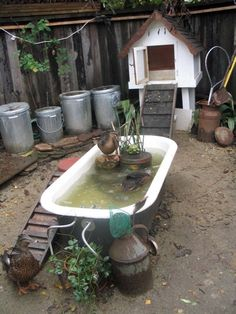 Raised duck pond then drain the water to use in the garden! Description from pinterest.com. I searched for this on bing.com/images