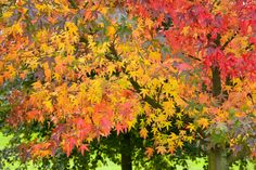 Before the cold snap hits this week, enjoy these glorious photographs of trees   in full autumn colour