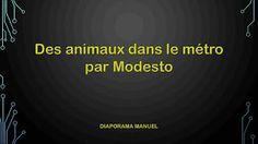 Diaporamas gratuits chez kamdou: PPS Des animaux dans le métro  @ MODESTO