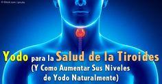 El yodo es esencial para la función saludable de la tiroides y un metabolismo eficiente, pero la mayoría de las personas carecen de este mineral.  http://articulos.mercola.com/sitios/articulos/archivo/2015/04/26/riesgo-de-deficiencia-de-yodo.aspx