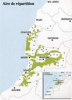 Arganier: Un plan de bataille pour le nouveau pétrole vert