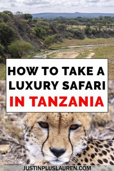 What to Expect from a Luxury Safari in Tanzania: The Best Tanzania Safari Experience with Yellow Zebra Safaris – Travel Destinations Adventure Awaits, Adventure Travel, Tanzania Safari, Countries To Visit, Travel Guides, Travel Tips, Travel Plan, Travel Articles, Travel Essentials