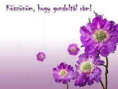 KÖSZÖNÖM KÉPESLAPOK - tanitoikincseim.lapunk.hu Lavender Walls, Beautiful Flowers Wallpapers, Interior Paint, Interior Design, Flower Wallpaper, Wonderful Images, Natural Beauty, Purple, Nature