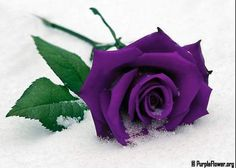 love you baby images Types Of Flowers, Diy Flowers, Fresh Flowers, Purple Flowers, Purple Roses Wallpaper, Grave Flowers, Facebook Cover Images, Facebook Timeline, Blooming Rose