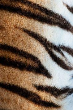 How To Make Tiger Stripe Patterns Tiger Stripes Tigers