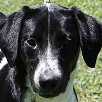 Pictures of BONNIE (URGENT!) a Border Collie for adoption in Carrollton, TX who needs a loving home. Carrollton Texas, Animal Rescue Site, Border Collie, Pet Adoption, Safari, Meet, Dogs, Pictures, Animals