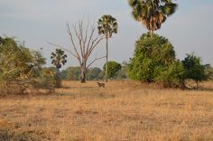 Spotted from a distance #WildernessSafaris