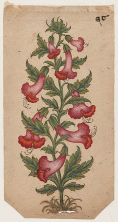 Plant with red trumpet-shaped flowers. Indian, Pahari (circa Image and text courtesy MFA Boston. Botanical Flowers, Botanical Illustration, Botanical Prints, Illustration Art, Illustrations, Kalamkari Painting, Indian Arts And Crafts, Tree Stencil, Asian Tattoos