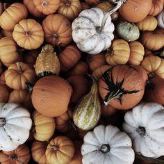 autumn, pumpkin, and fall image Autumn Cozy, Autumn Fall, Thanksgiving, Autumn Aesthetic, Happy Fall Y'all, Hello Autumn, Fall Harvest, Harvest Season, Harvest Time
