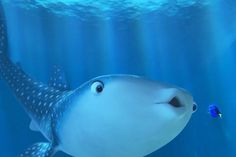 Screencap Gallery for Finding Dory Bluray, Disney, Pixar). Dory is a wide-eyed, blue tang fish who suffers from memory loss every 10 seconds or so. Dory Finding Nemo, Disney Finding Dory, Disney Pixar, Walt Disney, Dreamworks, Pixar Characters, Kid Movies, Sea Creatures, Shark