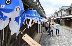 白壁の町並みに飾られた、サムライブルーの青色を使った「金魚ちょうちん」=11日、山口県柳井市
