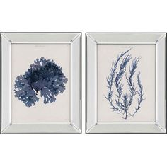 Seaweed I, Set/2 from Paragon (1173), $382.00