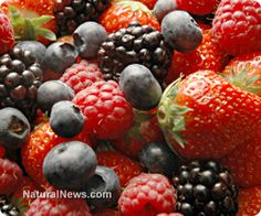 A diet rich in berries can help mitigate the heart-damaging effects of being overweight. http://www.naturalnews.com/042329_eating_berries_overweight_women_heart_health.html