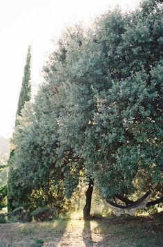 Delicate Provence Sunrise Wedding Ideas hammock! yes please!