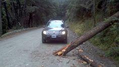 Se me cayó una ramita. Camino al cerro tronador - Bariloche