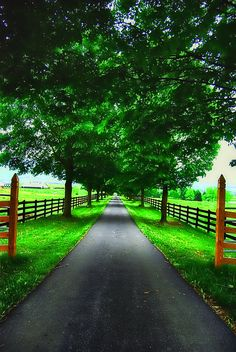 A tree lined drive way surrounded by rolling green pastures with beautiful fencing is all I want